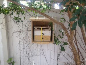 crate shelter tree