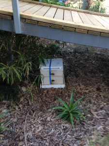 hive under bridge